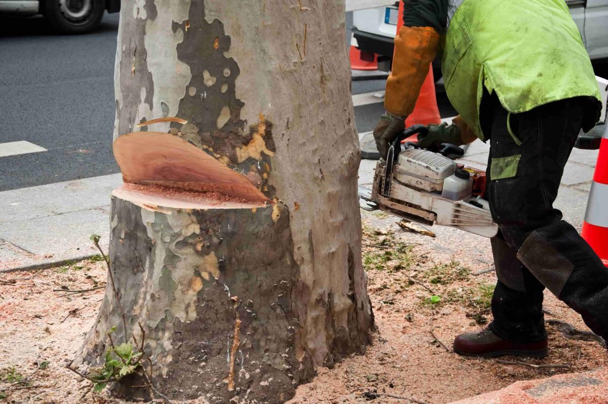abattage arbre ville
