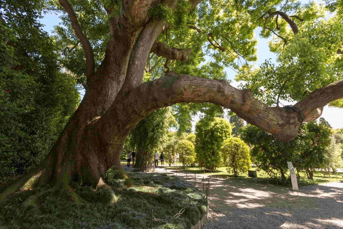 chene arbre remarquable