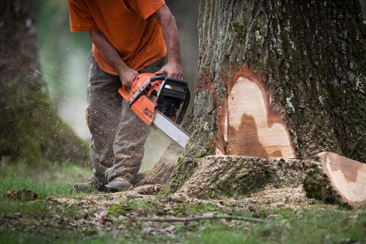 abattage coupe arbre