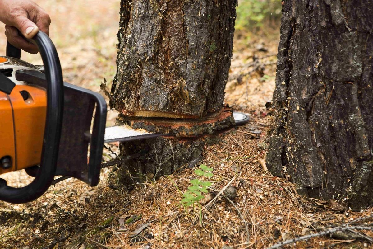 autorisation abattage arbre