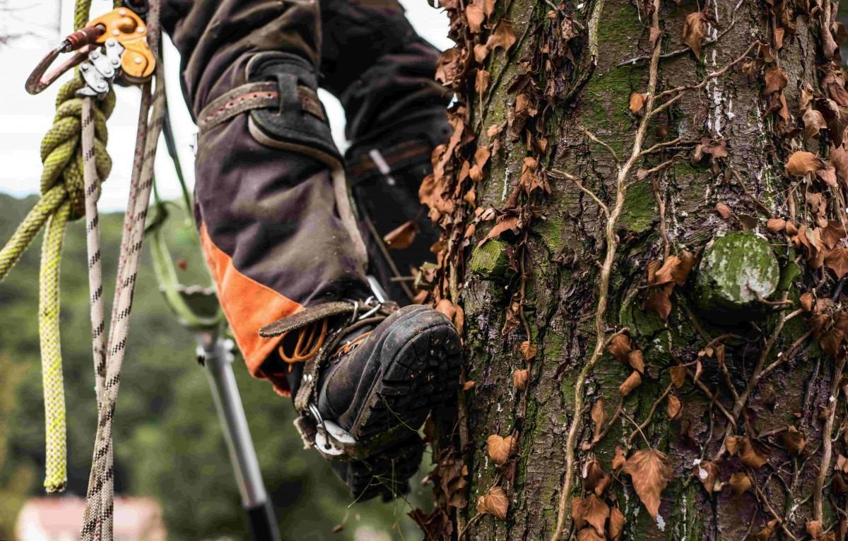 grimpeur arbre