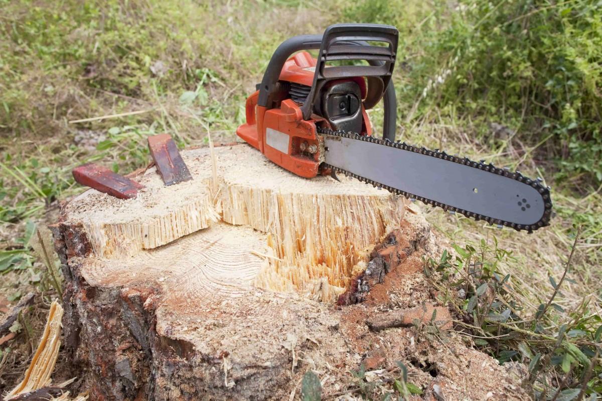 dessouchage deracinement arbre