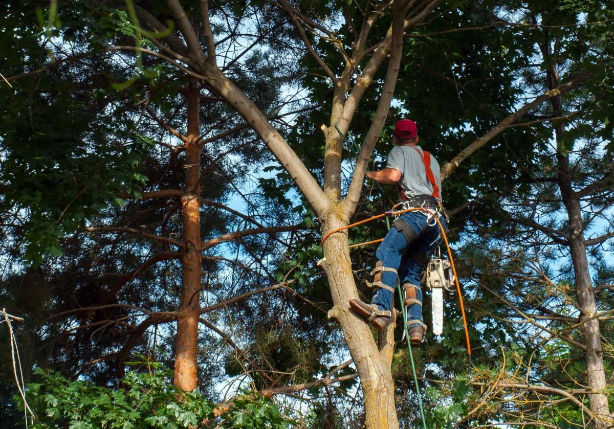 élagueur démontage arbre