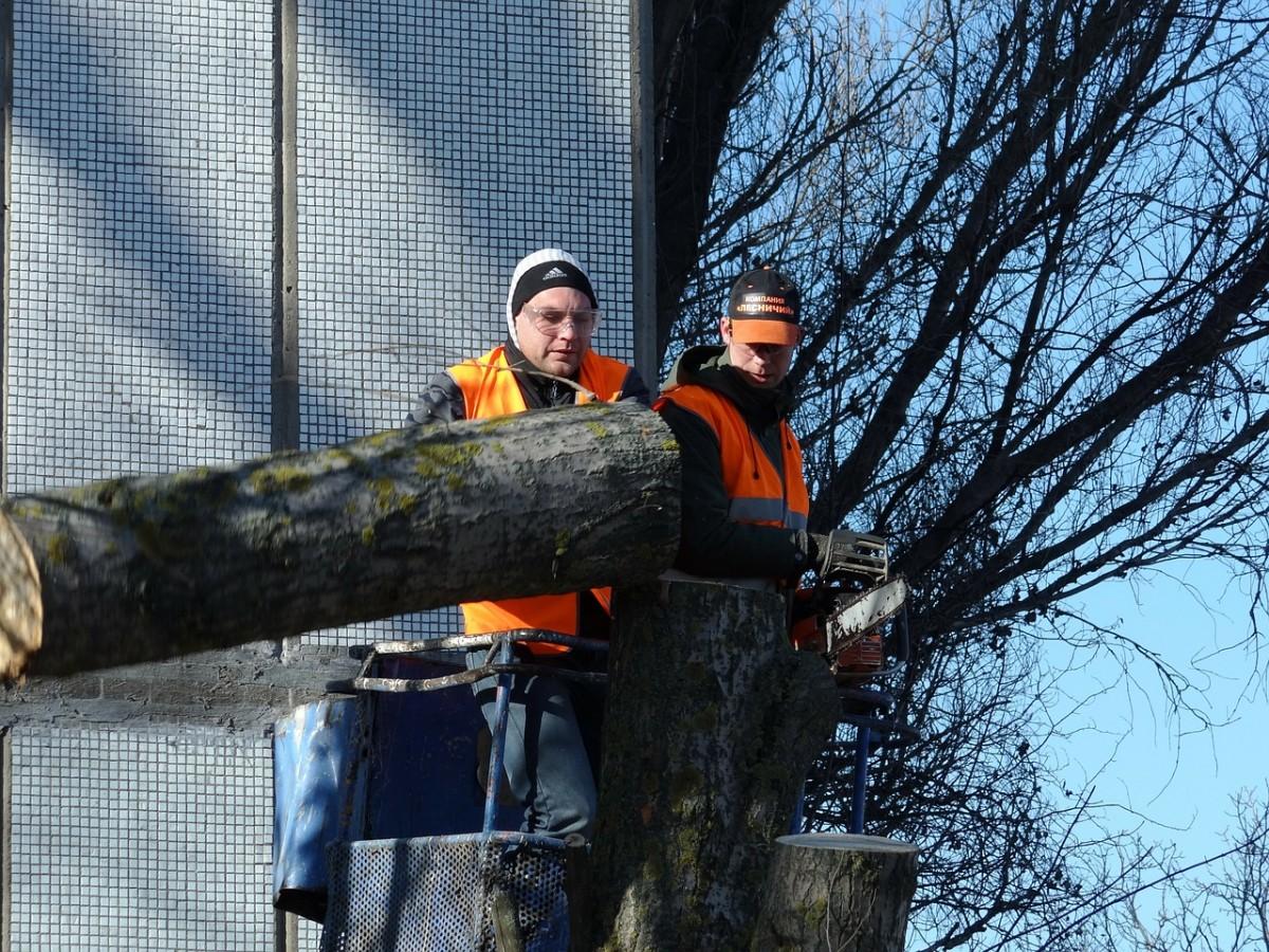 Les opérations d'abattage d'arbre