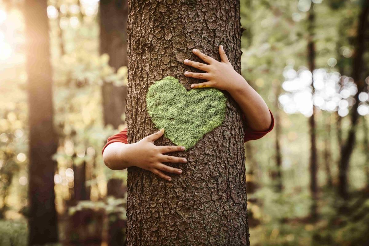 Les espèces d'arbres protégées en France