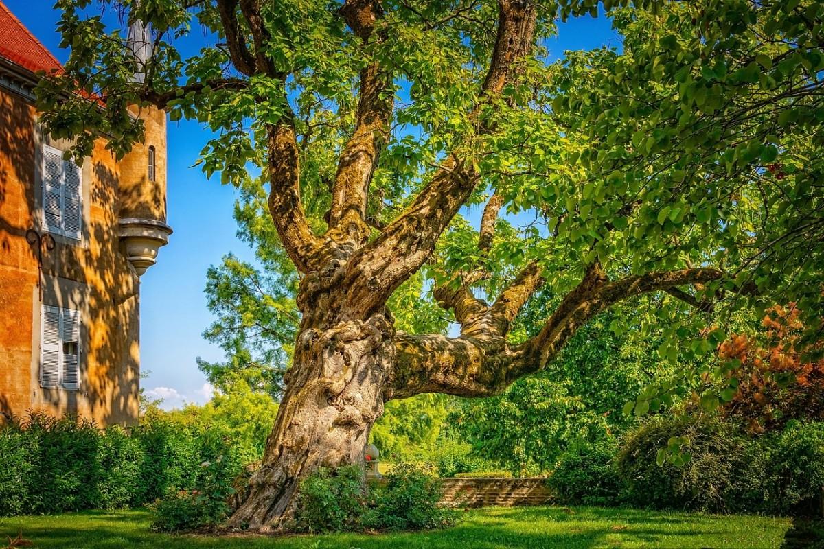 Dessouchage d'arbre et gestion des rémanents